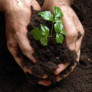 Gardening Ideas Daily