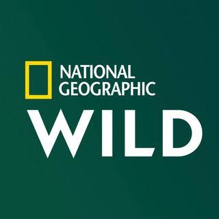 Nat Geo Wild France