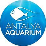 Antalya Aquarium  Instagram Hesabı Profil Fotoğrafı